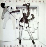 Birds Of Prey - Godley + Creme