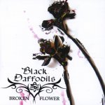 Broken Flower - Black Daffodils