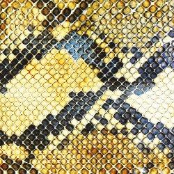 Amphetamine Ballads - Amazing Snakeheads