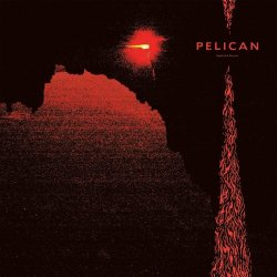 Nighttime Stories - Pelican