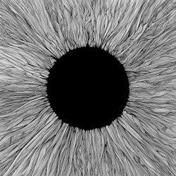 Witness - Vola